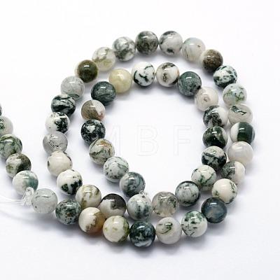 Natural Tree Agate Beads StrandsG-I199-03-8mm-1